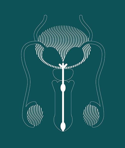 MON007 Illustrations Male System